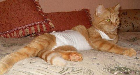 Средние цены на стерилизацию кошек на дому, плюсы и минусы домашней операции