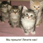 График прививок (вакцинации) для кошек — когда, от какого заболевания и как часто
