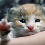Три главных правила для выбора здорового котенка
