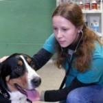 Ветеринарная клиника Неовет