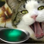 Как правильно дать таблетку вашей кошке — лучшие способы