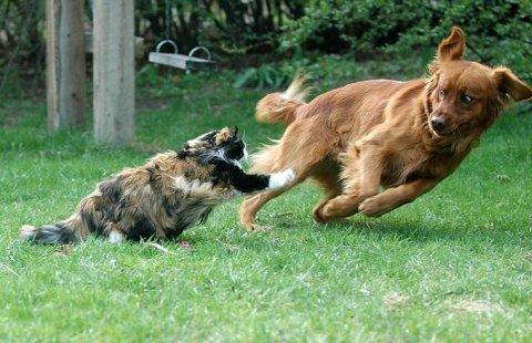 Знаете ли вы, почему именно кошки и собаки враждуют между собой?