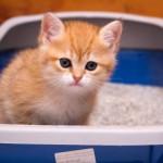 Что делать, если появилась кровь в моче у кота — причины и лечение заболевания