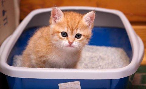 Моча с кровью у кота причины и лечение дома