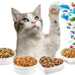 Производители корма для котят премиум класса — обзор лучших брендов
