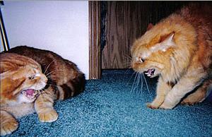 Если вы взяли второго кота…