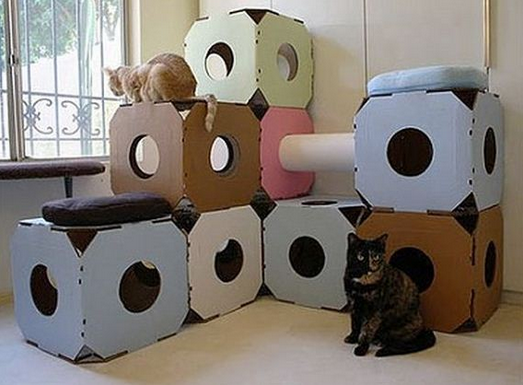 Как содержать сразу несколько кошек в доме