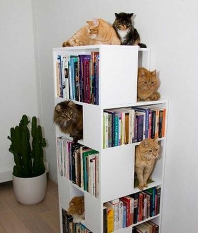 Оригинальные идеи для интерьера в «Кошкином доме»