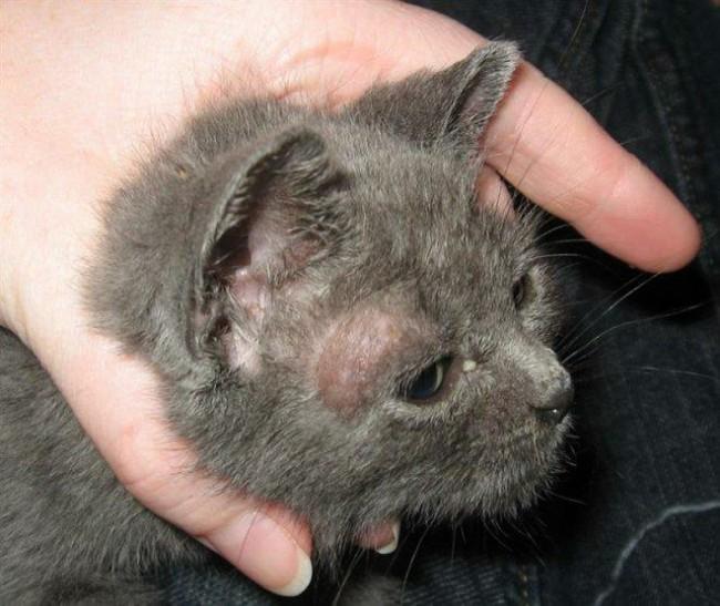 Заболевания от кошек