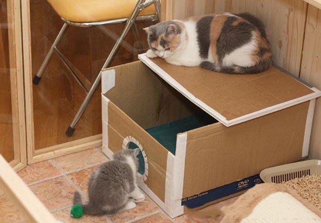 Как сделать дом коту
