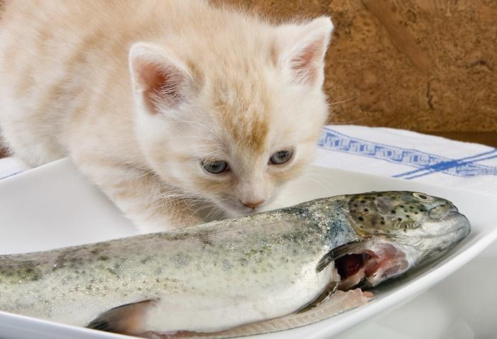 Можно ли кормить кота рыбой каждый