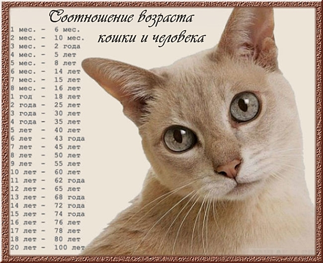 соотношение возраста кошек и людей